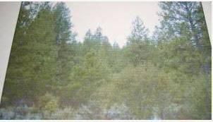 $7995 1.54 Acres in Oregon Pines subd. Klamath County Or (Klamath County Or)