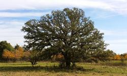 Beautiful 40 plus acres in Montague County, approx 1/2 pasture and 1/2 trees. Stock pond with easy area to expand. Great area to build a dream home, hunt or raise livestock. Deer, wild turkey, quail. Sunset Call