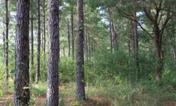 Five peaceful acres on a blacktop road with water service and electricity ten minutes from the interstate. Pine trees and rolling hills with a creek in the back; perfect for a future pond site. Chesbrough Schools. Owners willing to finance. Other sizes