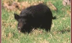 ATTENTION PIG HUNTERS I This an amazing property only 25 minutes north of Paso Robles in the Parkfield area of So.Monterey County. SELLER MAY CARRY! Located on two sides of Vineyard Canyon Rd (a paved road) there is a huge variety of topography offering